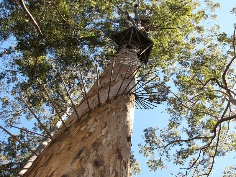 fire-lookout-tree-01