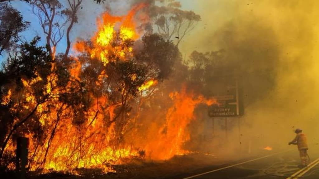 Hazard reduction burning in the Ku-ring-gai National Park north of Sydney in August. Photo: NSWRFS