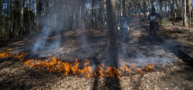 Fighting Fire with Fire – Cultural burning at Bundanon brings life back to the land