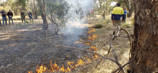 A Discussion on Ecological and Hazard Reduction Burning