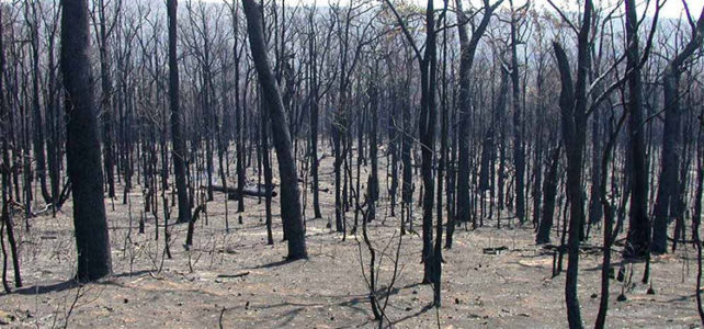 A note on climate change and bushfires