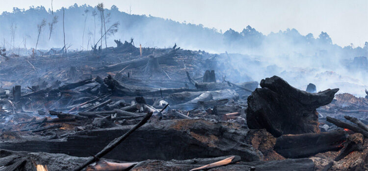 The Utter Failure of Yet Another Bushfire Panel